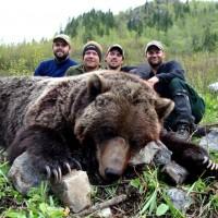 Interior Mountain Grizzly