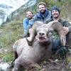 Rocky Mountain Bighorn Sheep - Picture Gallery