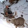White Tail Deer, Mule Deer